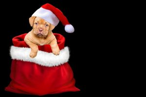 christmas, gifts, dog