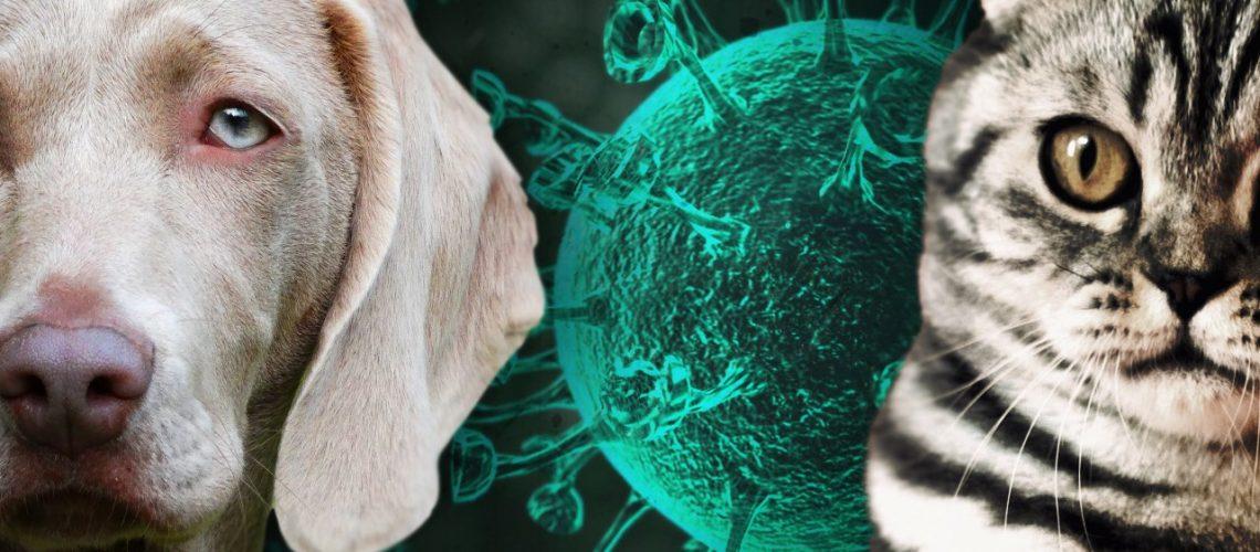 pet+coronavirus